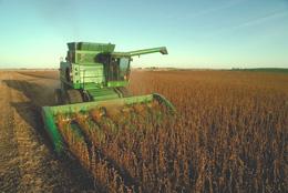 Cambé quer manter excelência na colheita da soja