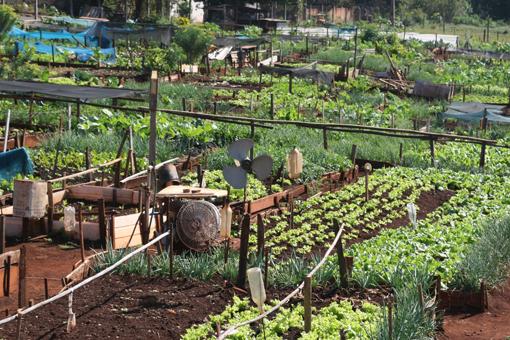 Projeto de Hortas Comunitárias traz para a cidade a vida simples do campo em Cambé