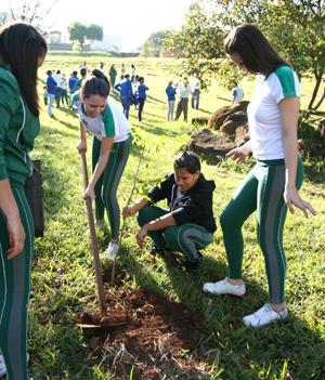 Meio Ambiente planta árvores no Zezão