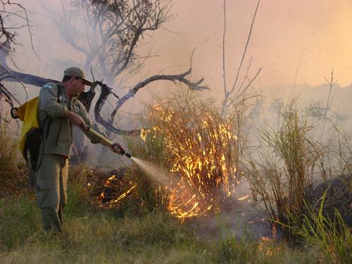 Fogo já destruiu 25% da Floresta Nacional de Brasília