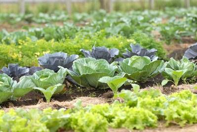Governo vai fiscalizar níveis de agrotóxicos em alimentos
