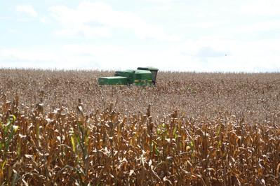 Produção de milho avança em tecnologia e impulsiona investimentos no Paraná