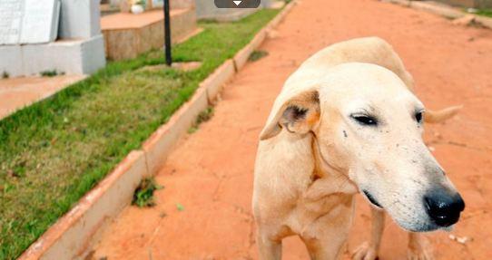 Cachorro vai morar em cemitério para ficar perto de ex-dono morto há quatro meses no Paraná