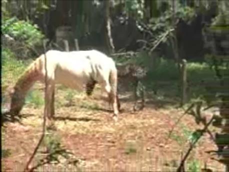 Tv Cambé investiga denuncia sobre falta de conservação de fundo de vale do Zezão