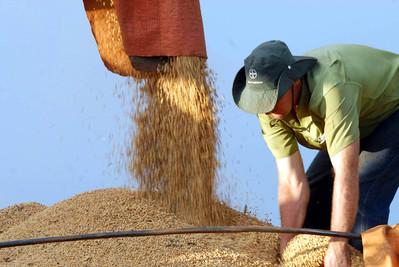 Paraná deverá produzir 22,13 milhões de toneladas de grãos na safra de verão