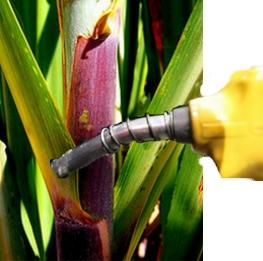 n_sindacucar_etanol_1022801987