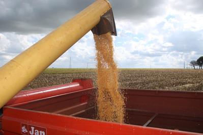 Paraná colhe o maior volume de milho safrinha de todos os tempos