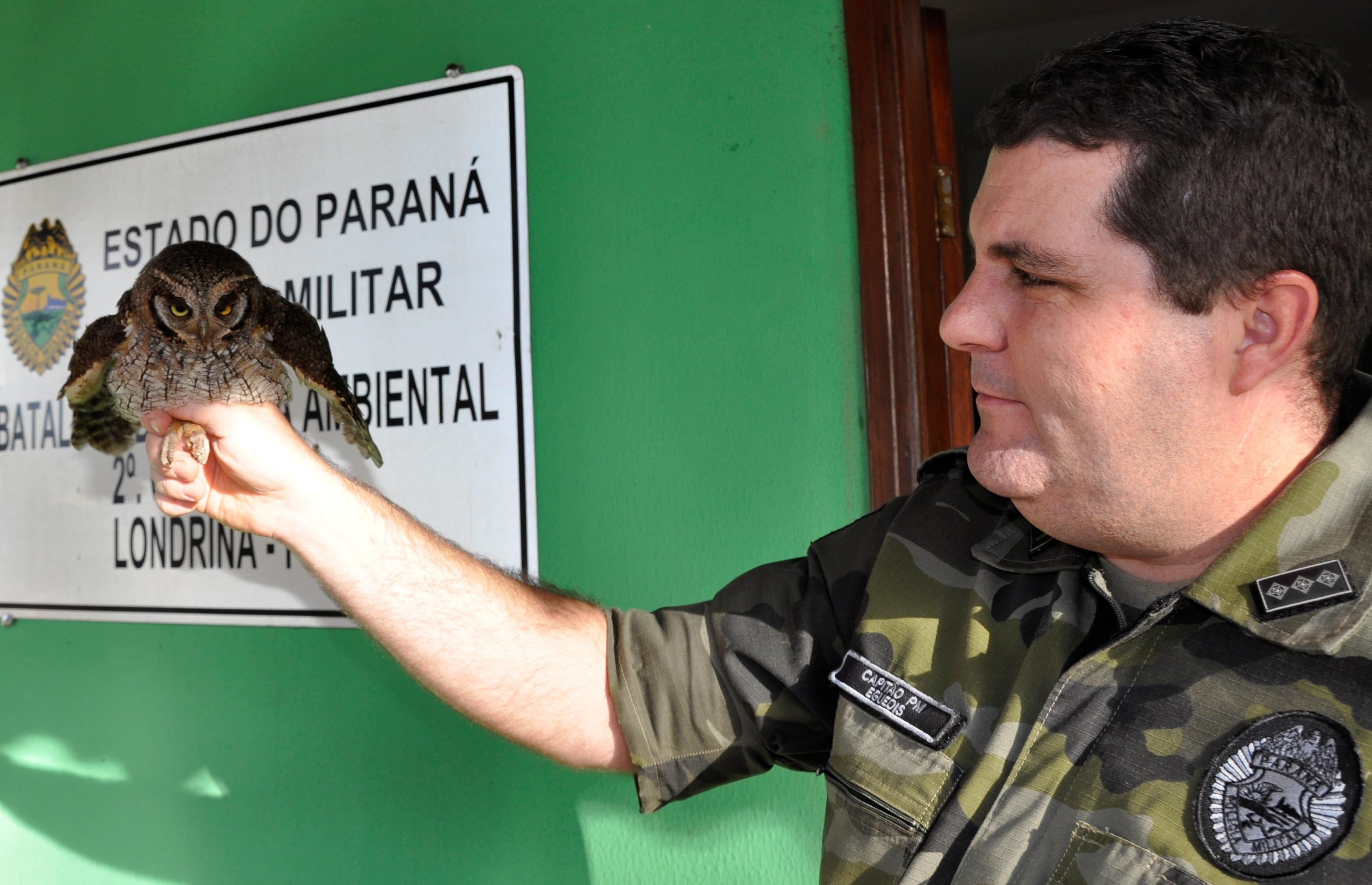 POLÍCIA MILITAR AMBIENTAL AUXILIA NO RESGATE DE JOVEM CORUJA DO MATO EM LONDRINA.