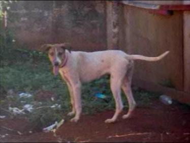 Feira para adoção de pequenos animais será realizada no Centro de Eventos de Cambé (Vídeo)
