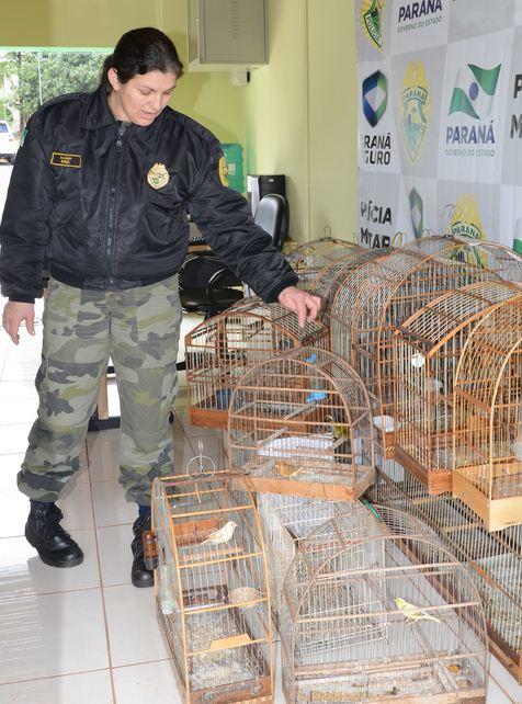 Ação conjunta da 4ª CIPM E  Polícia Militar Ambiental apreende  pássaros silvestres Londrina.