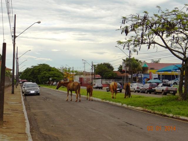 Cavalos andam livremente pelo Jardim Santo Amaro em Cambé