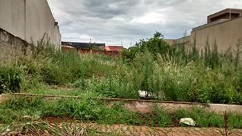 Prefeitura notifica proprietários de terrenos em situação de abandono