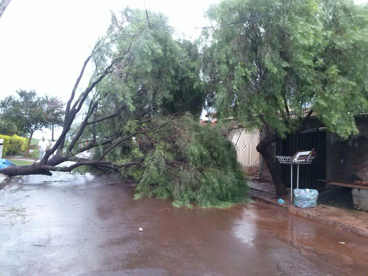 Fortes chuvas derrubam arvores e deixam rua sem energia elétrica em Cambé