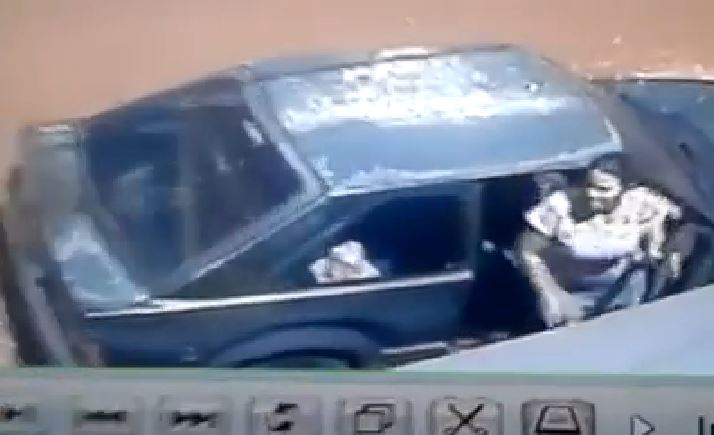 Após repercussão de vídeo, polícia investiga abandono de cães em Cambé
