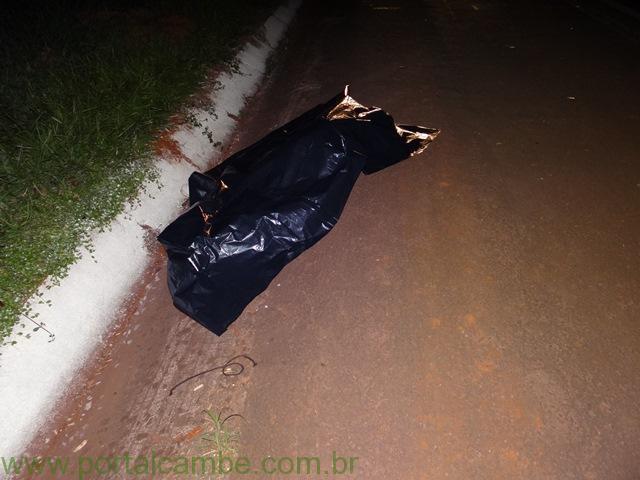 Atropelamento deixa uma vítima fatal na BR-369 em Cambé