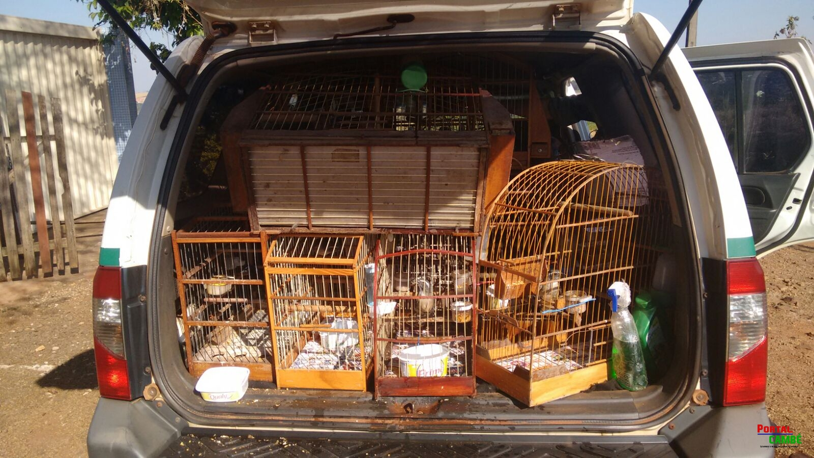 Polícia Ambiental apreende 42 pássaros silvestres em Apucarana