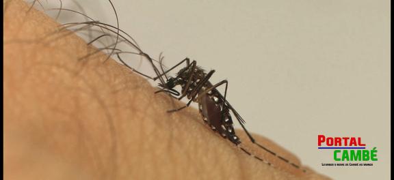Anvisa registra teste rápido para detecção do vírus Zika em até 20 minutos