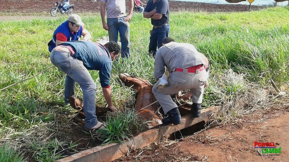 Bombeiros resgatam cavalo que caiu em buraco em Cambé