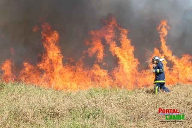 Incêndio ambiental causa transtornos no Jardim Castelo Branco em Cambé