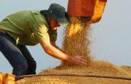 Nova reavaliação projeta safra de grãos ainda maior no Paraná
