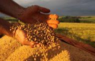 Paraná é o primeiro do mundo na produtividade de soja