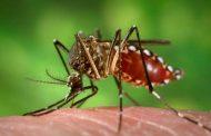 Cambé é a terceira cidade do Paraná com o maior número de casos confirmados da dengue