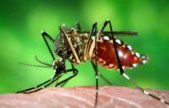 Saúde alerta para cuidados com a dengue no final do verão