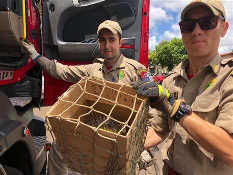Morador da zona oeste de Londrina encontra porco-espinho dentro de casa e aciona bombeiros - Portal Cambé